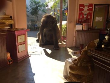 A very laid-back elephant