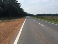 One of the many palm oil plantations