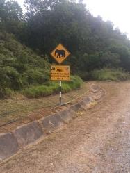 Unfortunately I didn't see any wild elephants