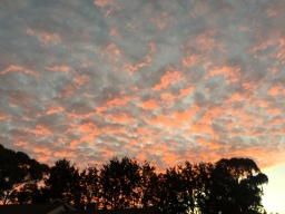 """Whoever said """"Red sky at night, shepherd's delight"""" was a liar.. it rained in the morning"""