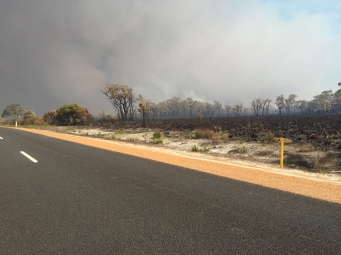 'Controlled' forest fire
