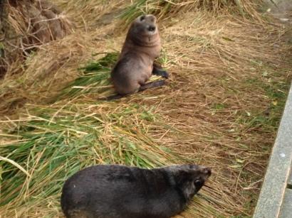 Some seals :-)