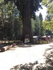 Chandelier Tree